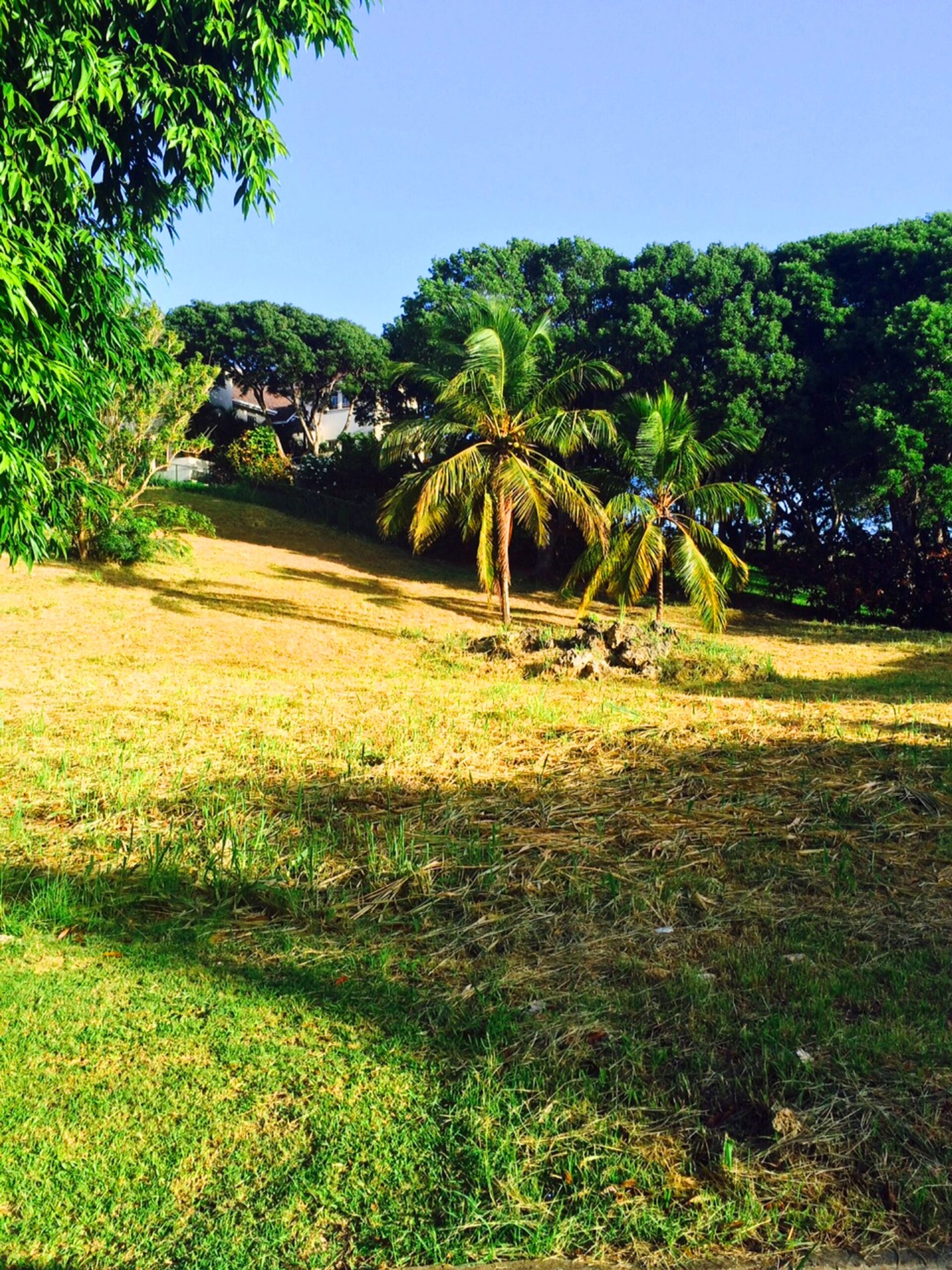 Countryside, Lot 12, Vaucluse, St Thomas (#86420)